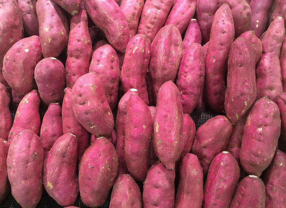olahan ubi ungu